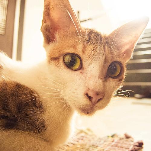 Feline guest - 1