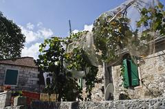 Vine (roksoslav) Tags: nikon croatia vine dalmatia dol dvor loza bra 2015 sigma18125mm d7000