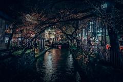 Kiyamachi Street  in Japan Kyoto . .   DSC_5512 (Ming - chun ( very busy )) Tags: road street travel japan cherry nikon kyoto blossom traditional 28mm scene   cherryblossom   gion nikkor f18   d800   streetshot 28mmf18 streelamp         traveljapan streetsnap streetscence  sukura      nikon28mmf18   f1828mm