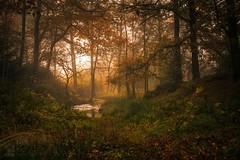 Dun Dubh II (GenerationX) Tags: autumn trees mist leaves landscape scotland unitedkingdom scottish neil gb prints trossachs spiderwebs barr aberfoyle thenarrows lochard queenelizabethforestpark achrayforest canon6d laraich dondubh