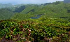 Dominica - Morne Micotrin