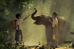 Boy and girl with elephant (djmThailand) Tags: africa boy food pets love girl animal kids bag children asian thailand zoo student friend war asia basket box ivory happiness son buddy safari uniforms siam carrier wwf pinto cites
