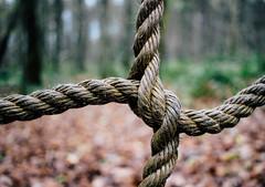 touw (MJ Klaver) Tags: forest grid bokeh rope depthoffield blad 24mm bos touw raster primelens canon100d canonefs24mmf28stm