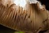 Below (ralf.kerkhoff) Tags: deutschland d natur nrw makro pilze nahaufnahme experimente botanik reken kleinreken