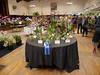 P1100040 (cieneguitan) Tags: flora lan bunga orkid okid angrek anggerek