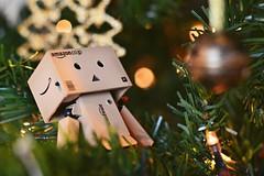 Christmas Danbo (Francesca Pei) Tags: christmas tree lights natale danbo danboard