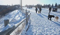 A Dog's Christmas (Sherlock77 (James)) Tags: calgary dogpark snow winter streetphotography people dog