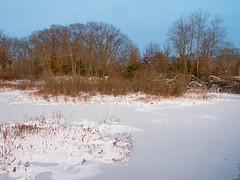 Foxboro Cranberry Bogs 9 (dennisgg2002) Tags: foxboro massachusetts ma cranberry bogs winter new england snow landscapes