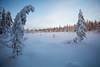 Leaning tree (Andersson Högholm Photography) Tags: swamp snow lapland blue hike snowshoe tree outdoor finland suomi forrest wood woods winter frozen ice landscape space sky clouds tracks explore explorer north cold nature canon vennivaara フィンランド 拉普兰 芬兰 финляндия лапландия зима luonto talvi maisema rovaniemi lumi puu lappi light flickr