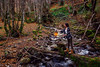 La Xana (titodixebra) Tags: xana asturies asturias quirós quiros lindes llindes modelo modelu candil luz lluz ríos tronco tueru