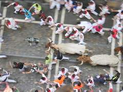 Bull run thru Calle Estafeta!