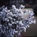 * (öш) Tags: pentax67 105mmf24 mediumformat 6x7 film filmisnotdead slidefilm fujichrome provia 100 wideopen bern switzerland rosengarten