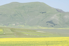 Castelluccio : a beloved valley from a whole nation (sandromars) Tags: italy italia umbria perugia castelluccio