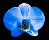 _1210429 (5816OL) Tags: arboretum arboretum2016 flowers dad orchids