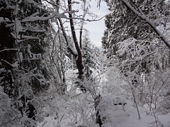 Winter (mag3737) Tags: snow woods forest fromme mtfromme