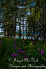 IMG_8529 (Forget_me_not49) Tags: alaska alaskan wasilla lakes lucillelake boardwalk pier sunrise waterways