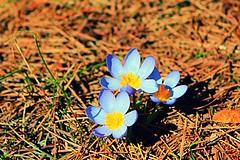 Winter flower (BaraWalker) Tags: greece parnitha nature flower colors winter