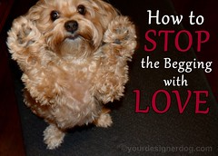How To Stop the Begging With Love (yourdesignerdog) Tags: ifttt wordpress advice tips tricks all posts begging blog cute designer dogs love manners pets photography sadie wordless wednesday yorkipoo