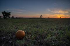 March 10: vacation sundown (_Matt_T_) Tags: smcpm20mmf4 dusk sunset orange florida 113