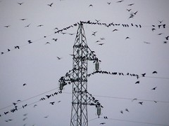 hitchkock's fav's (jo.vanka) Tags: birds evening industrial powerlines kosova kosovo ptaki ferropool