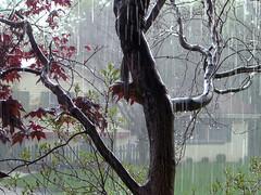 Rain (2006 Version)