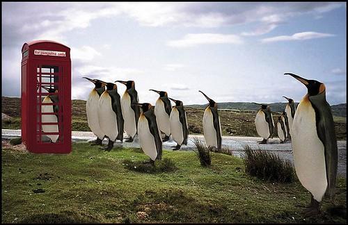Pingüino llamando a casa