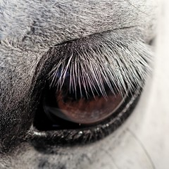 Eyebrow (danielguip) Tags: horse interestingness bretagne payitforward mutik