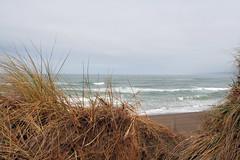 Dune (Sharon Mollerus) Tags: ocean california sea beach grasses sanddunes pointarena mendocinocoast manchesterbeach 123nature 1on1nature qd09 qdm13