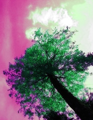 kesakuu1-2006 016b (Fantasyfan.) Tags: tree topv111 tag3 taggedout finland tag2 tag1 colorfull womenonly tweak tweaked twisted bedlam fantasyfanin prj