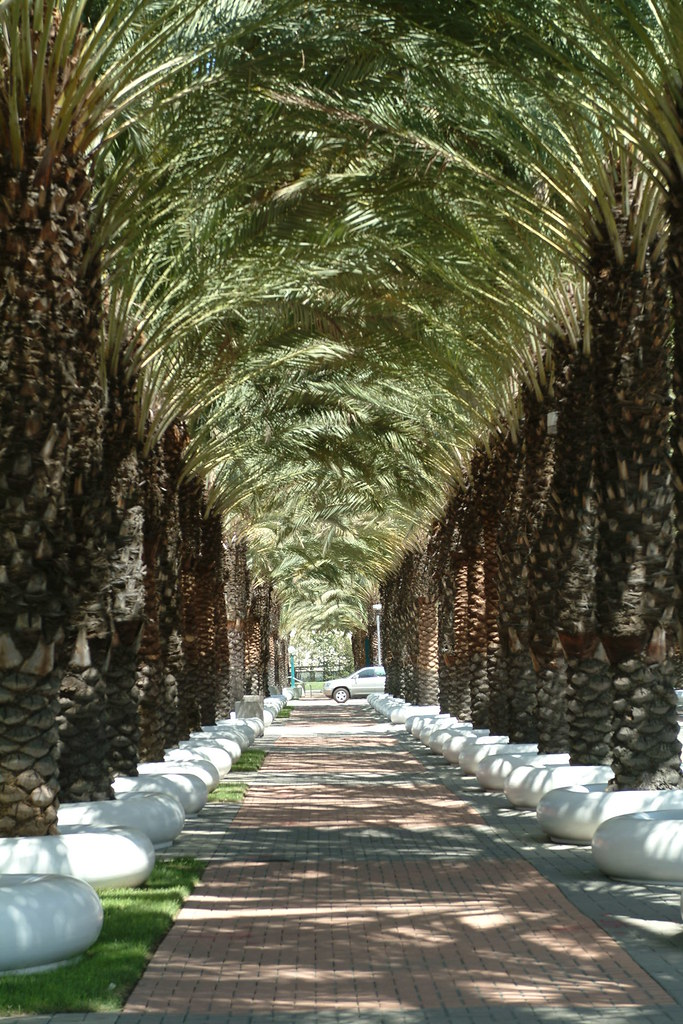 Palm Tunnel