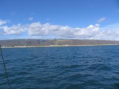 IMG_2395 (Dan F.) Tags: hawaii napalicoast bluedolphin kaua'i