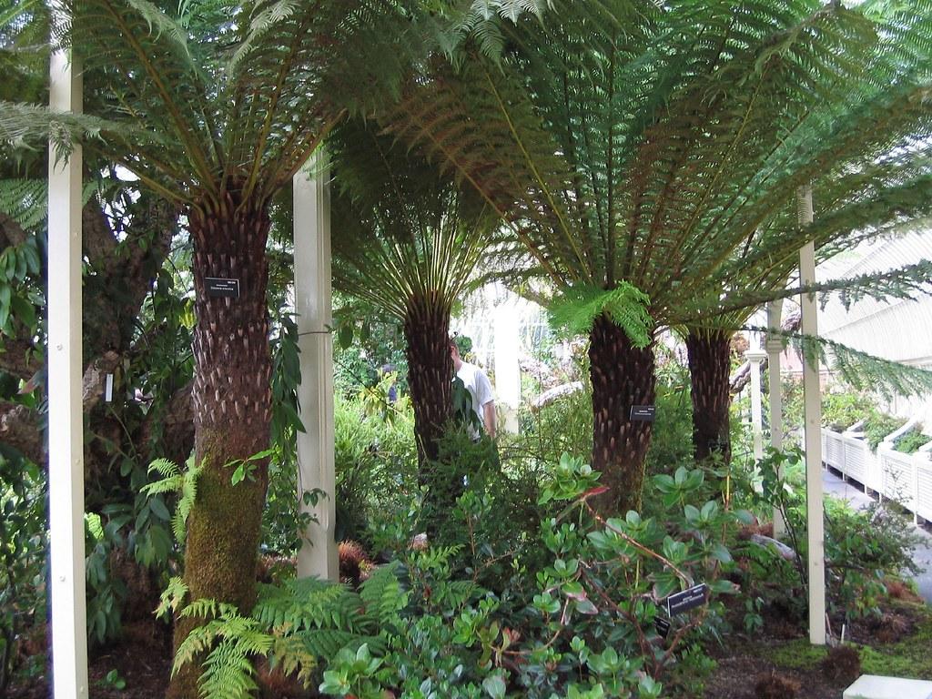 National Botanic Gardens (Dublin)