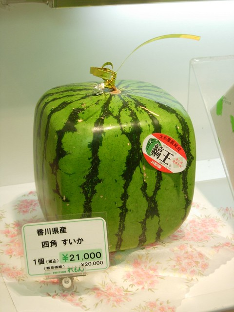 Square Watermelon!