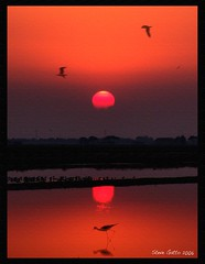 "Sunset in ""Saline"" (steve_steady64) Tags: sunset red italy sun lake heron birds animals reflections emotion peaceful romantic saline cervia stevegatto stevegatto stevegattofolgarida extremedesign"