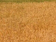 http://farm1.static.flickr.com/58/187890218_99b18bdab9_m.jpg