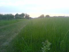 Berkhamsted fields 2 (doranandrew) Tags: summer field evening berkhamsted