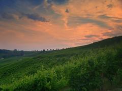 vineyards (SarahDomingos) Tags: sunset vineyards luxembourg vignes weinberge