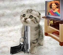 carrottop cat