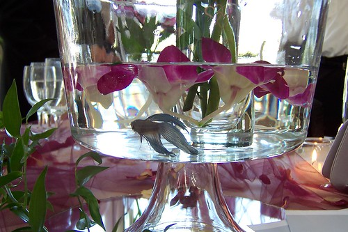 My niece 39s wedding reception centerpieces each had a Betta swimming ...