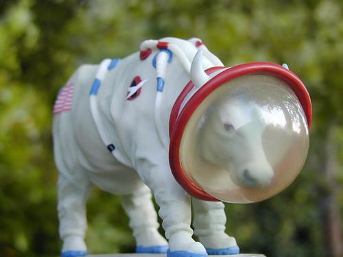 Cow in astronaut suit