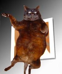 Happy Furry Friday (Elenara Stein Leito) Tags: cat blackcat interestingness funny lol preta stolen furryfriday fatcat sitio ggg oob gattone cc700 cat1000 ggg03 lolanimalhof lmaoanimalphotoaward