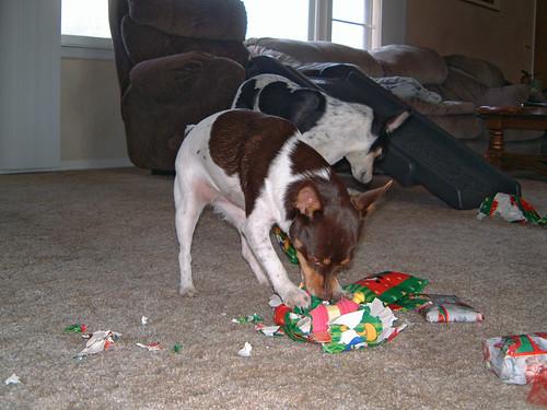 2005-12-25 - DoggieXMas-0011