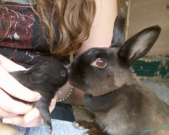 rabbit mother and child (ksvrbrg) Tags: baby rabbit mother