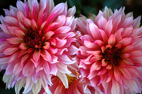 BBG Flowers