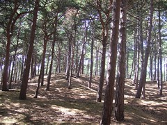 Pine forest at Formby (in vino veritas) Tags: wood summer forest daytrip formby august2006