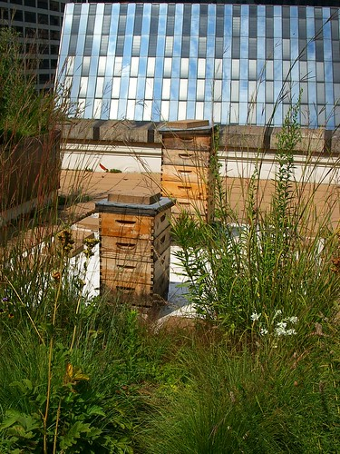 Hives by mindfrieze, on Flickr