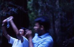 ug-mamu-3.jpg (adagu) Tags: forest redwood rohit udayan
