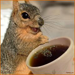 コーヒーかす利用法 肥料や堆肥、消臭に
