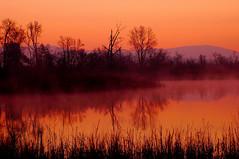 Sunrise in Alabama. (BamaWester) Tags: trees sky orange sun lake nature topf25 water sunrise pond quality alabama silhouettes 500v50f hamptoncove bamawester specnature napg sunriseinalabama abigfave