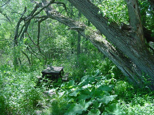 Wisconsin - Mysterious Forest Table #1